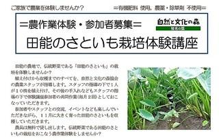 2019農作業体験:田能の里芋募集チラシ.jpg