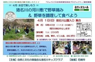 4.1野草を食べよう.jpg