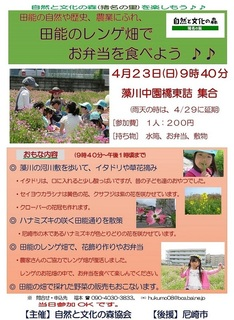 4.23レンゲ畑.jpg
