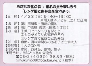 4.23レンゲ畑2.jpg