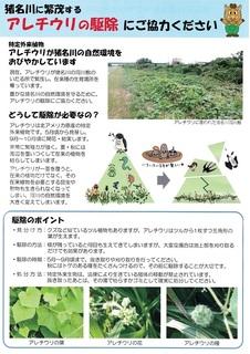 外来植物駆除ちらし-01.jpg