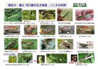 観察資料カード2018:河川敷の昆虫(改定3)-01.jpg