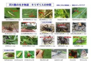 観察資料カード2018:河川敷の昆虫(改定3)-02.jpg