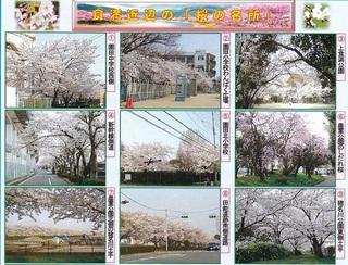 食満近辺の桜.jpg