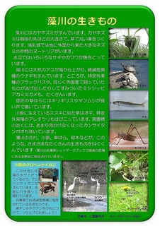 Microsoft Word - 藻川の自然.jpg