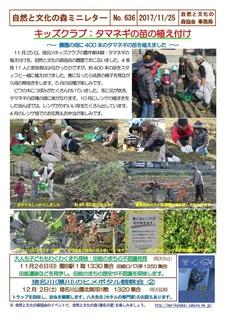 No.636キッズクラブ:タマネギの苗の植え付け2017.11.jpg