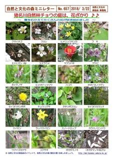 No.657猪名川自然林チョウの庭は花ざかり2018.3.jpg