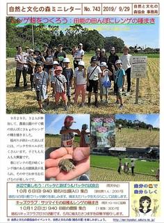 No.743レンゲ畑をつくろう:田能の田んぼにレンゲの種まき2019.9.jpg